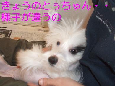 f0179203_9364356.jpg