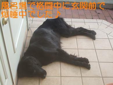 f0179203_9375560.jpg