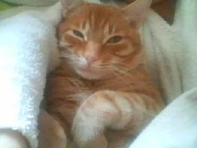猫って_f0178313_957756.jpg