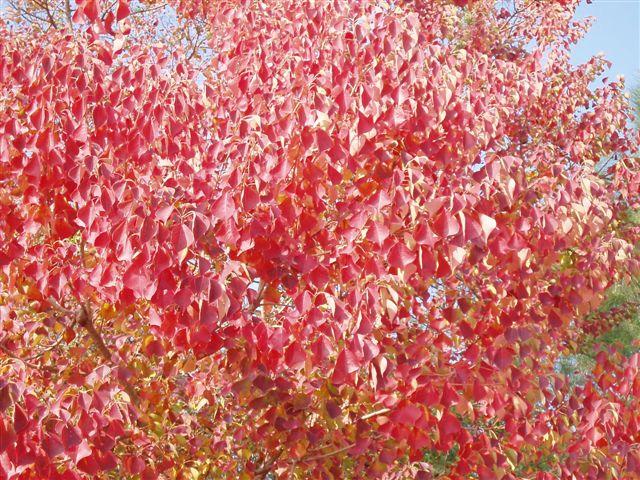 金門的「紅葉」_d0077719_18132122.jpg