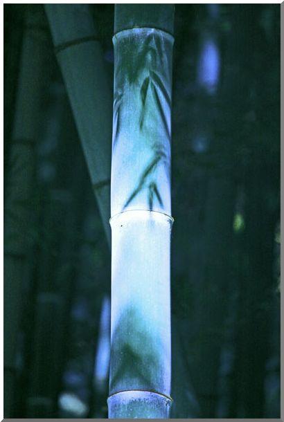 報国寺・竹の庵(鎌倉)NOⅡ_d0123528_10505664.jpg