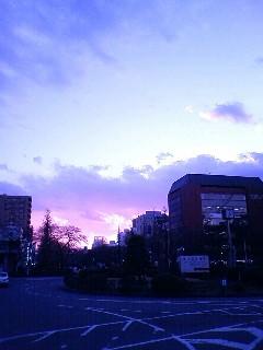 遠い日の桜吹雪に…_f0070628_173062.jpg