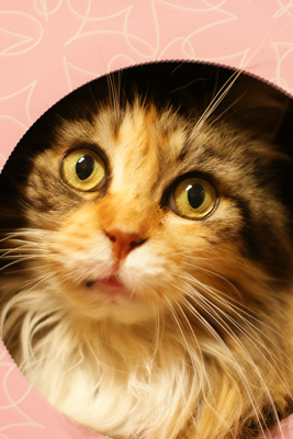 素敵な猫のミーナ_c0165636_1301136.jpg
