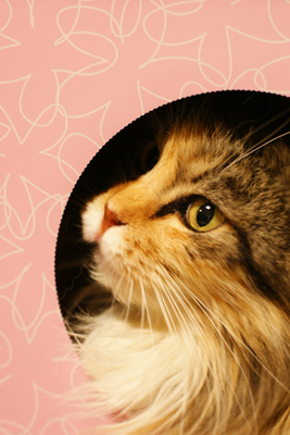 素敵な猫のミーナ_c0165636_1302583.jpg