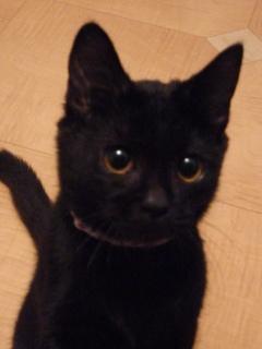 ろったちゃんにゃい猫 ろった編。_a0143140_2231471.jpg