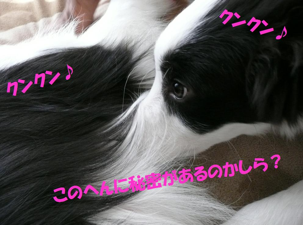 c0147241_23103120.jpg
