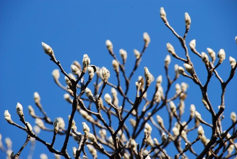 小さな春探し_c0187781_17452399.jpg