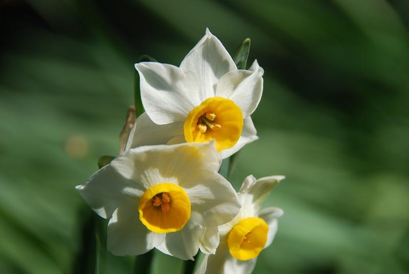 小さな春探し_c0187781_174527.jpg