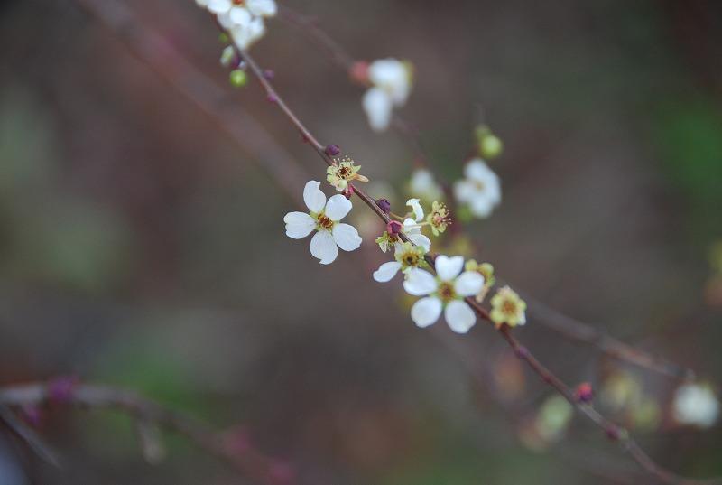 小さな春探し_c0187781_1746177.jpg