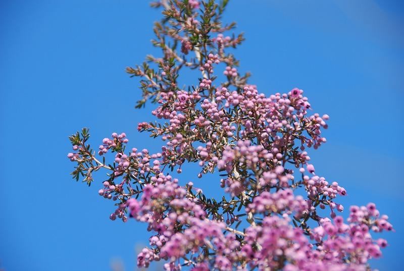 小さな春探し_c0187781_17482846.jpg