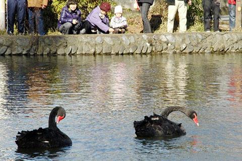 黒鳥と、黒い鳥_f0030085_21262191.jpg