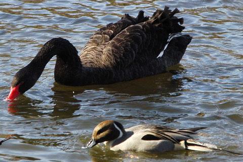黒鳥と、黒い鳥_f0030085_21284245.jpg