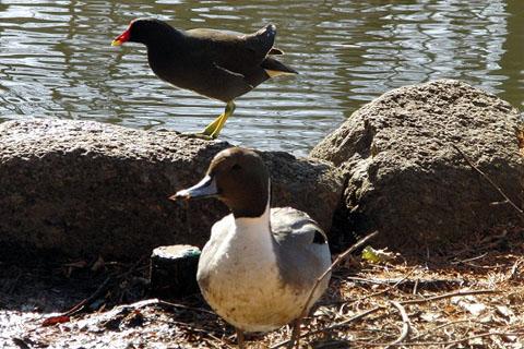 黒鳥と、黒い鳥_f0030085_21292263.jpg