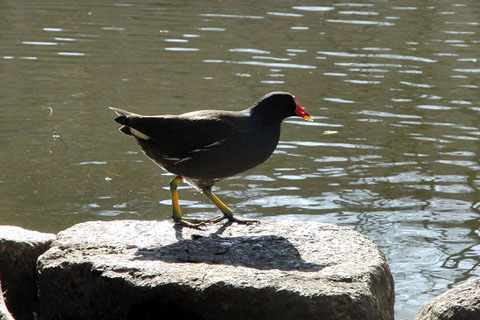 黒鳥と、黒い鳥_f0030085_2129437.jpg