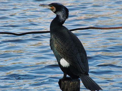 黒鳥と、黒い鳥_f0030085_2130940.jpg