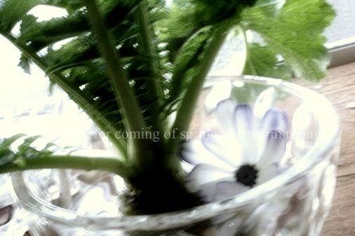 f0132986_195245.jpg
