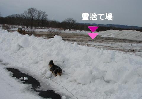 散歩する場所がないよ~_f0195891_16322793.jpg