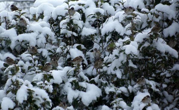 柔らかい雪の中で♪_a0136293_1514130.jpg