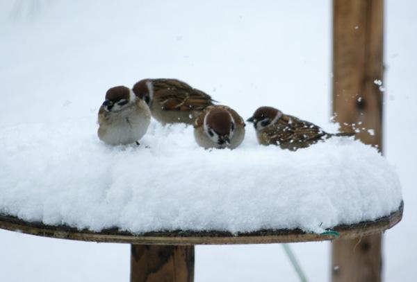 柔らかい雪の中で♪_a0136293_152191.jpg