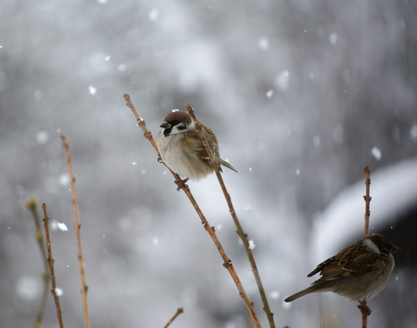 柔らかい雪の中で♪_a0136293_1522455.jpg