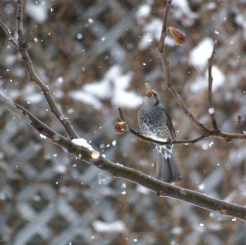 柔らかい雪の中で♪_a0136293_156136.jpg