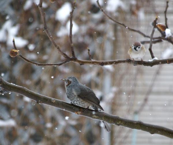 柔らかい雪の中で♪_a0136293_1562895.jpg