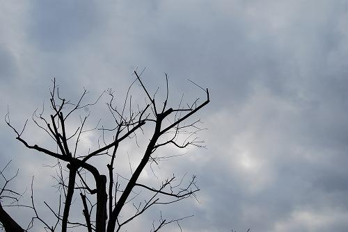 ひさしぶりの曇り空…_c0124100_1635454.jpg