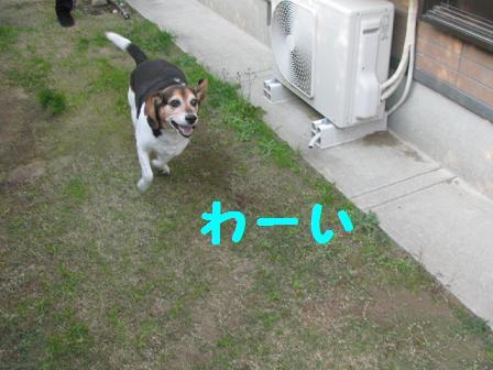 d0104209_185727.jpg