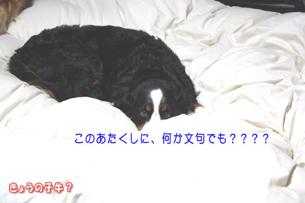 f0203423_9431687.jpg