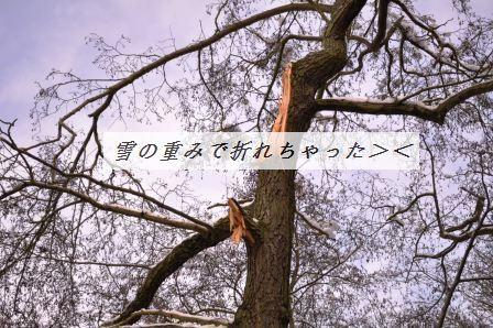 d0104926_142169.jpg