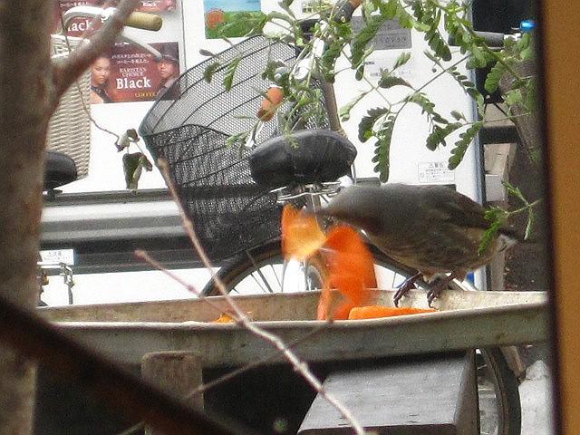小鳥のお宿_c0102228_18121590.jpg