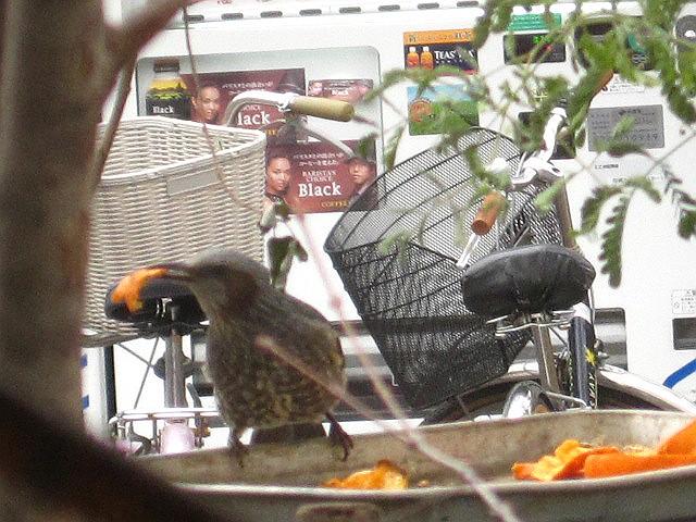 小鳥のお宿_c0102228_18131596.jpg