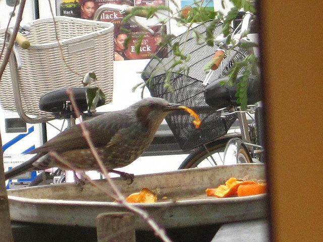 小鳥のお宿_c0102228_18133363.jpg