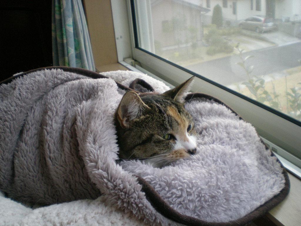 2010年1月11日(月)雨で寒い勝浦です!_f0060461_13134867.jpg