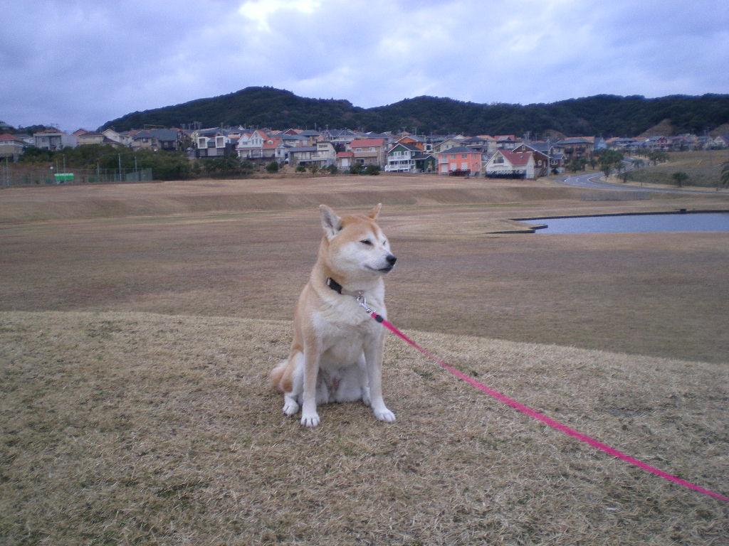 2010年1月11日(月)雨で寒い勝浦です!_f0060461_1391060.jpg