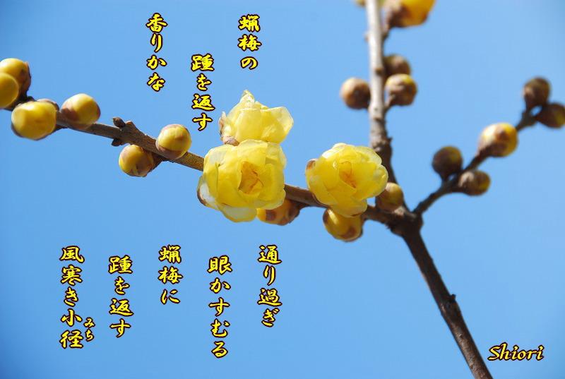 小さな春探し_c0187781_05935100.jpg