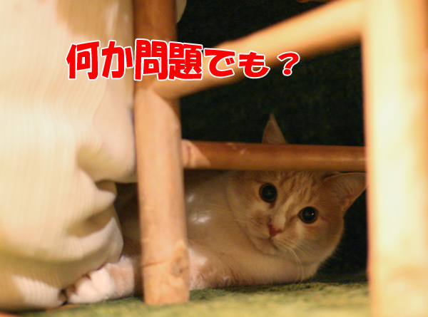 f0068385_459739.jpg