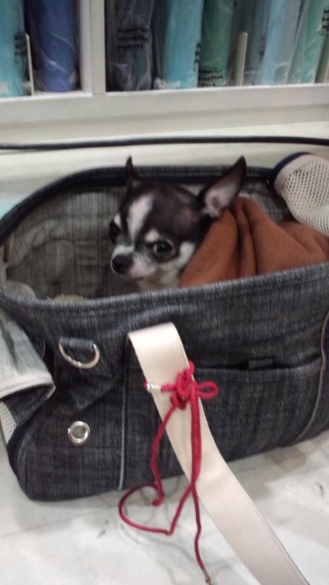 お犬様とあいなちゃんと私。_f0195703_2036831.jpg