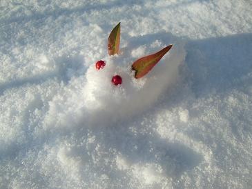 雪うさぎ_a0122205_22492123.jpg