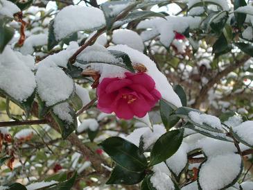 雪うさぎ_a0122205_22493025.jpg
