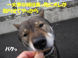 f0143123_2032733.jpg