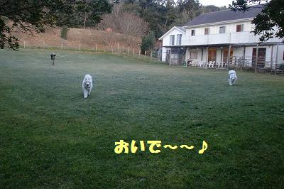 e0196135_20115051.jpg