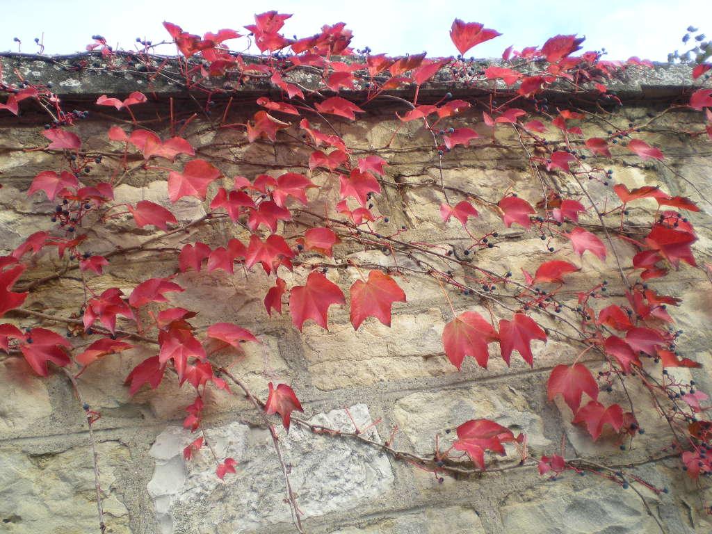 2010年1月12日(火)冬には赤い色が欲し~い!_f0060461_16392476.jpg