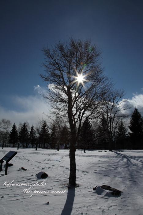 冬のシルエット_c0137403_18302067.jpg