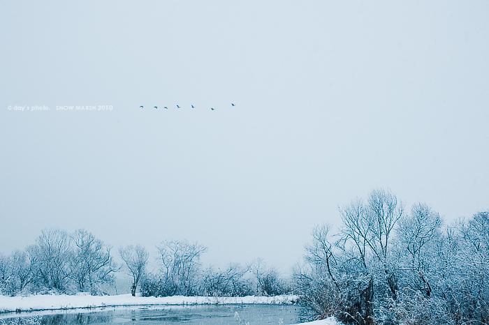雪景 #08 - final set -_e0117517_19575785.jpg