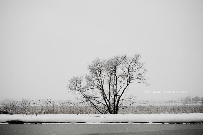 雪景 #08 - final set -_e0117517_19582578.jpg