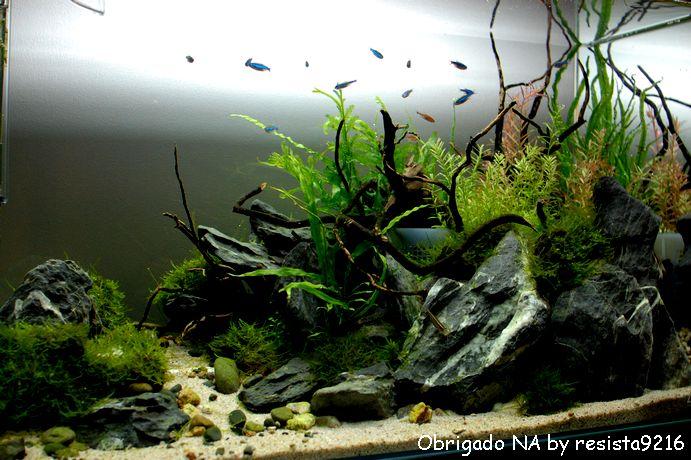 ガラス面の藻類_f0185924_23392931.jpg
