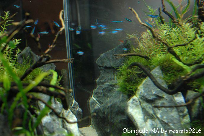 ガラス面の藻類_f0185924_2342960.jpg