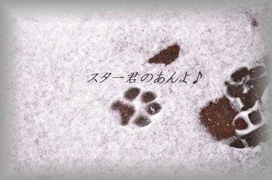 余ったお餅とようかんの超簡単ホットサンド☆_d0104926_05298.jpg