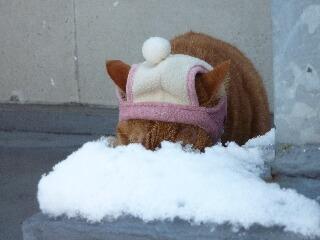 綿帽子猫 しぇる編。_a0143140_19321414.jpg